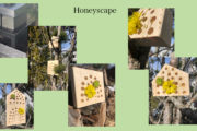 Bilde Honeyscape